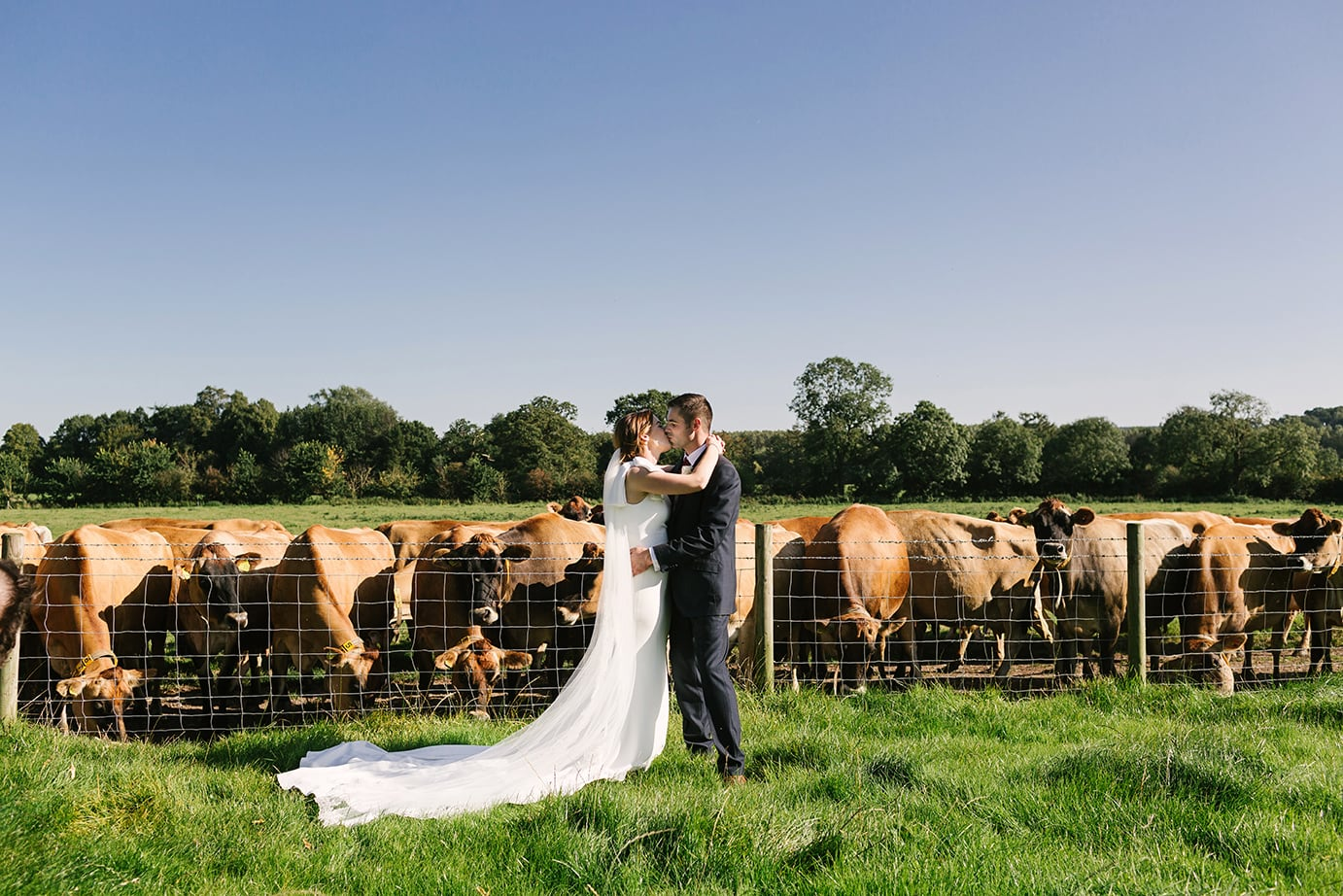 Farmers wedding with cows