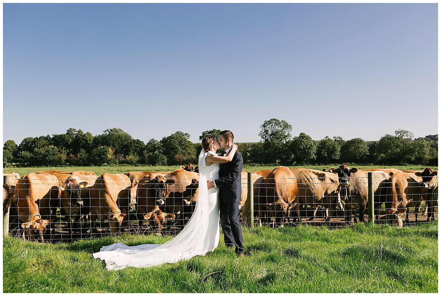Staffordshire wedding photography; newly married farmer couple with their cows